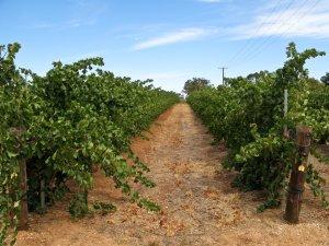 Clare Valley Vineyard
