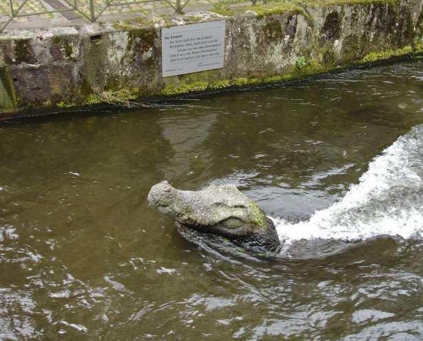 The canals have gators!