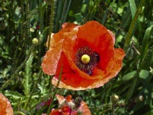 Flowers in Detwang