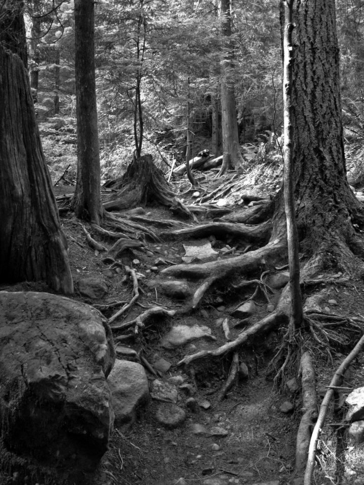 Roots and rocks and a trail