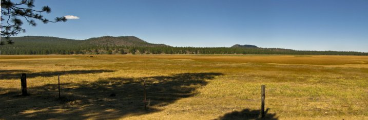 A meadow near Mt. Shast