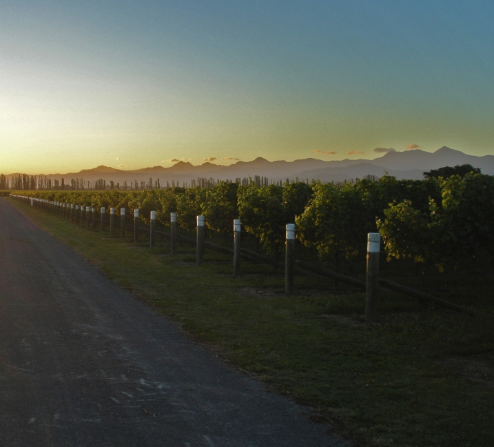 Marlborough vineyards at dusk