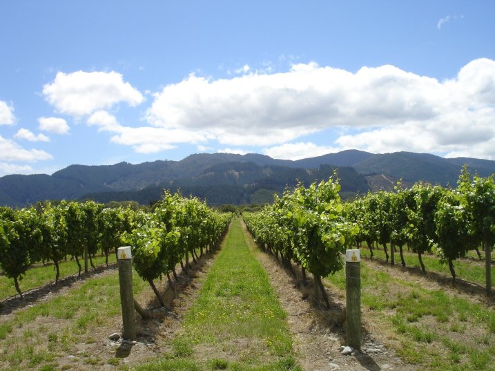 Huia Vineyards, Marlborough