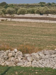 Stone walls dividing Sicilian fields