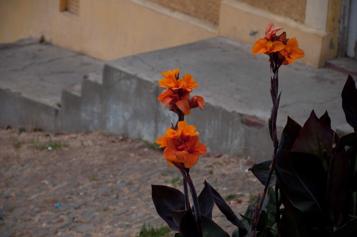Flowers growing in the street in Cerro Alegre
