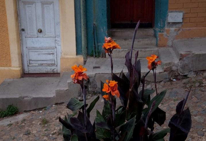 Flowers in the street in Cerro Alegre