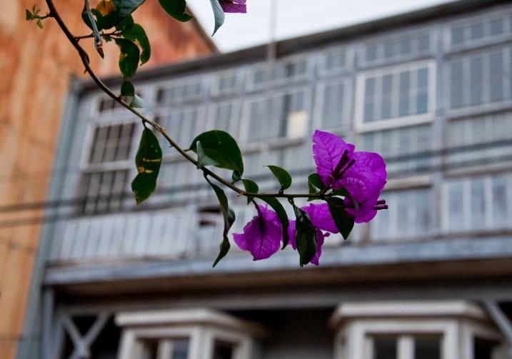 Flowers in Cerro Alegre, Valparaiso
