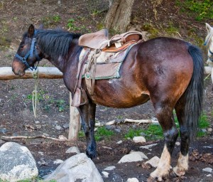 My horse at Refugio Chileno