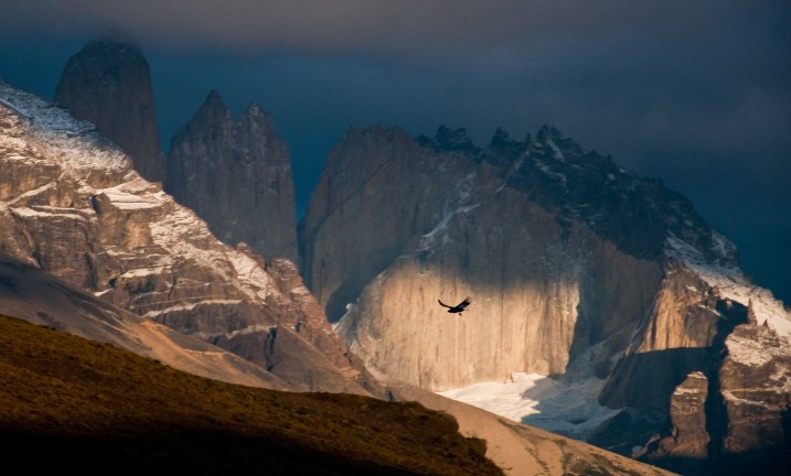 An Andean condor silhouetted against the Towers