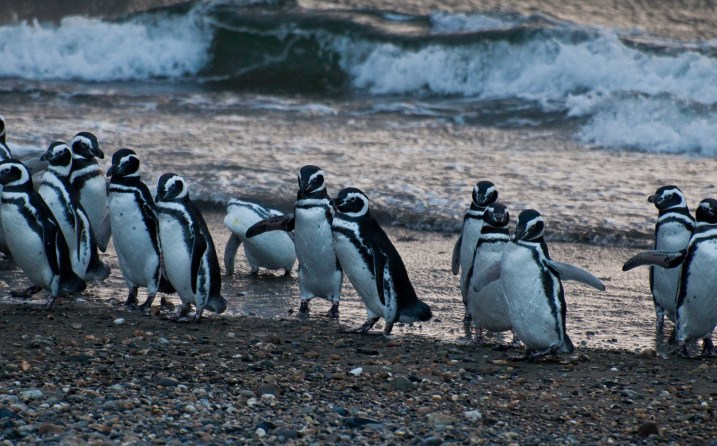 The penguin colony near Punta Arenas