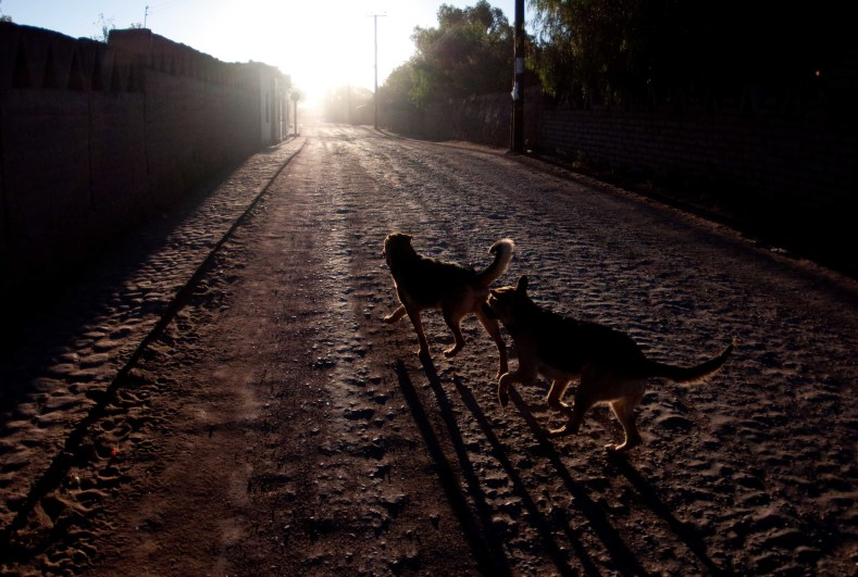 Our pack San Pedro de Atacama at dawn