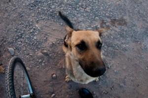 Our pack member from San Pedro de Atacama