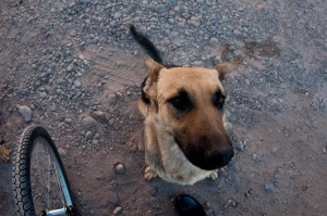 Our pack member from San Pedro de Atacama