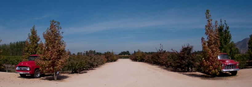 The road moving away from the winery at Vina Montes