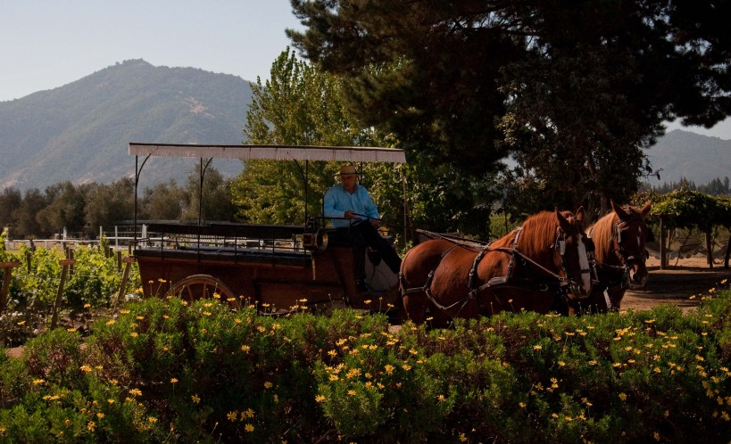 Our carriage for the tour of the vineyards at Viu Mament