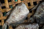 A fish drying in the market