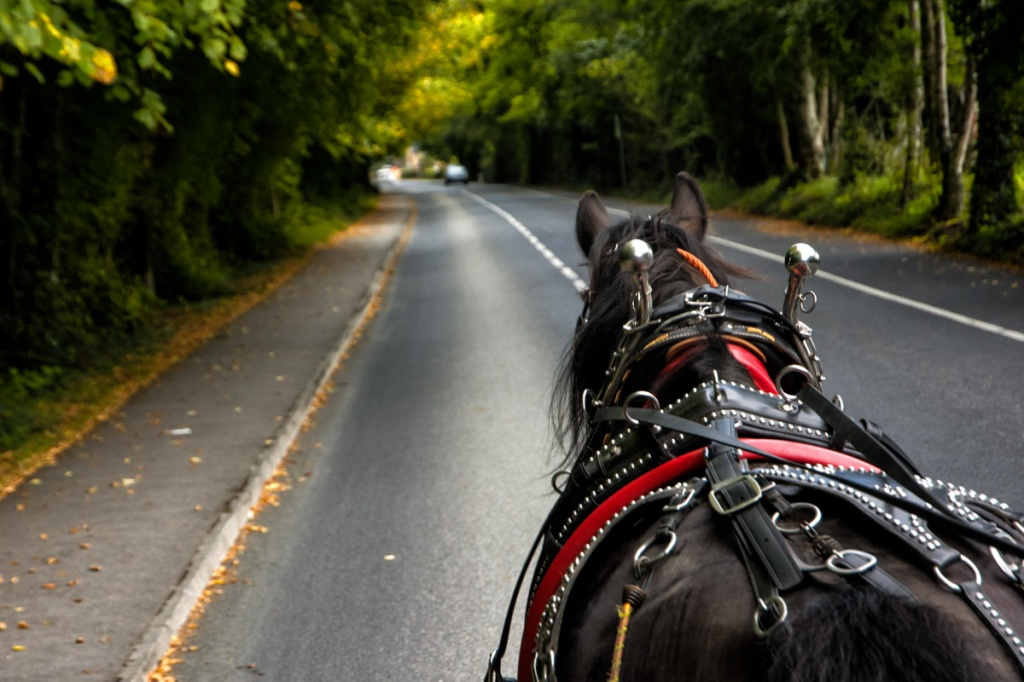 Horse power in Killarney