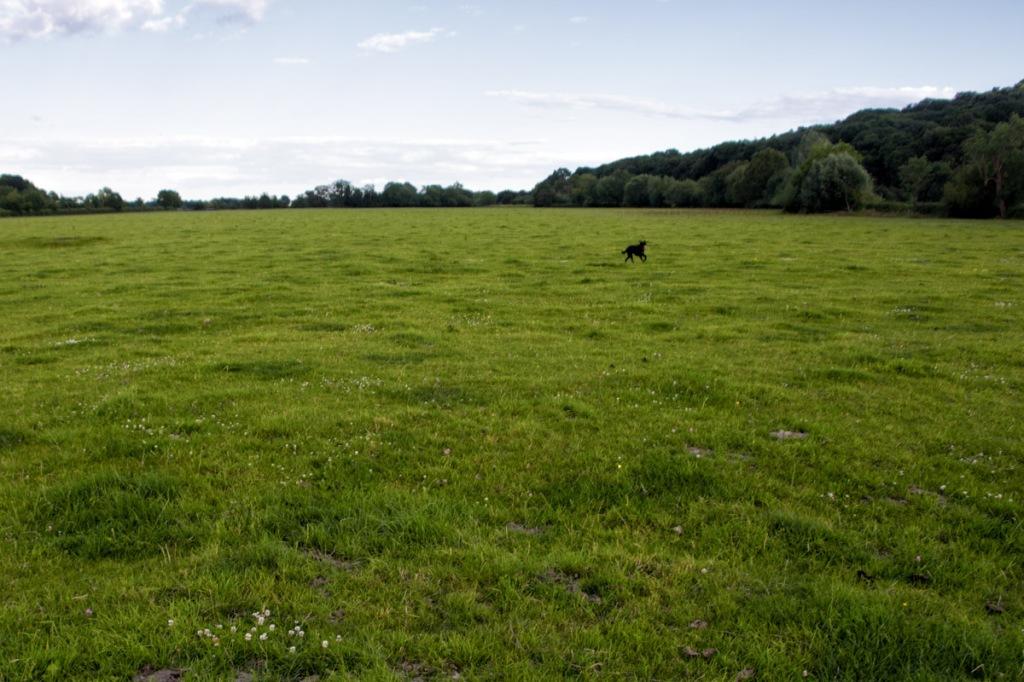 Runnymede is a wide open meadow alongside the Thames.