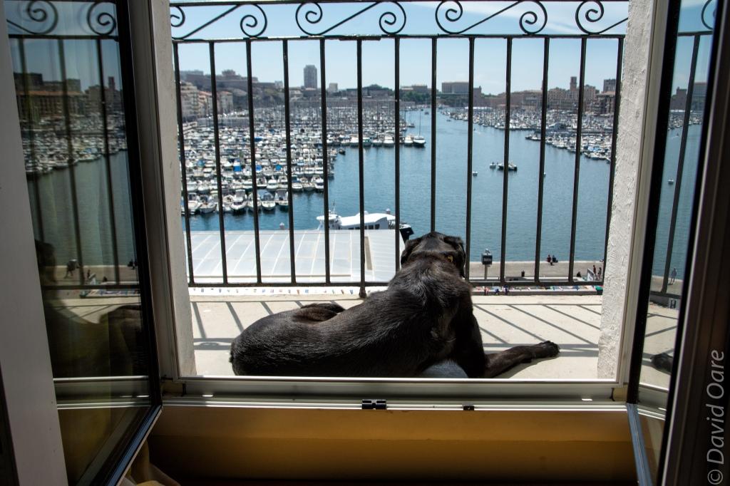 Gigi enjoying the sun in the south